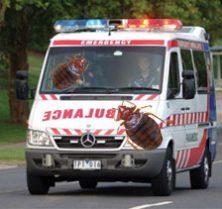 bed bugs in ambulances